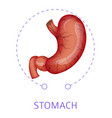 stomach isolated icon digestive system internal vector image