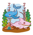 dolphin and shark animals with seaweed plants vector image