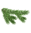Green lush spruce branch Fir branches vector image vector image