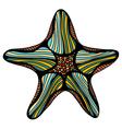 sketch of starfish vector image