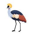 bird with long legs vector image
