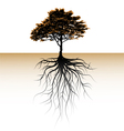 a tree with a visible root vector image vector image