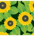 abstract sunflowers vector image
