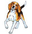 beagle hound vector image vector image