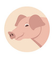 pig head flat style front vector image vector image