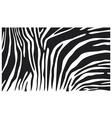zebra skin background vector image