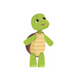 cute little turtle looks up standing on hind legs vector image vector image