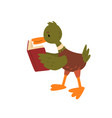 cute male mallard duck reading book funny vector image