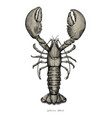 lobster hand drawing vintage engraving vector image vector image