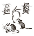 Mouse or rat animal sketched set