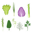 salad greens and leaves set vegetarian healthy vector image vector image