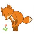 cartoon fox looks at flower vector image
