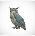 hand drawn colorful halloween scary owl vector image