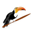 isolated cute toucan vector image vector image
