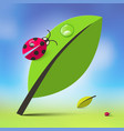 nature background with leaves and ladybugs spring vector image vector image