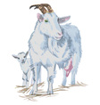 goats watercolor vector image vector image