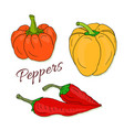 set of hand drawn sketch peppers chili and bell vector image