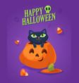 a cute black cat on halloween pumpkin vector image