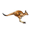 kangaroo from a splash watercolor colored vector image