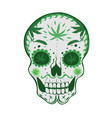 sugar skull with cannabis isolated on a white vector image vector image