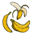 yellow banana fruit vector image