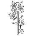 wild rose wraps around old key vector image