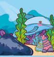 dolphin animal with shells and seaweed plants vector image vector image