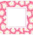 pink morning glory flower banner card vector image vector image
