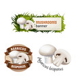 set mushroom banner badge sticker vector image vector image