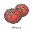 sketch hand-drawn red tomato vector image