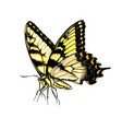 butterfly from a splash watercolor colored vector image vector image