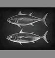 chalk sketch of tuna vector image