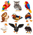 diverse birds standing set vector image vector image
