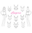 female lingerie collection with beautiful fashion vector image vector image