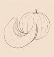 pumpkin hand drawn sketch on beige background vector image vector image