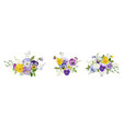 watercolor pansy flowers bouquet collection vector image