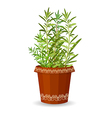 Rosemary in a flower pot vector image