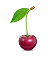 cherry with green leaf fresh vector image vector image