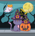 halloween cat and ghost vector image