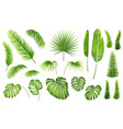 set tropical leaves vector image