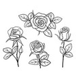 black and white vintage roses isolated set 02 vector image
