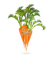 bunch of carrots bound by rope realistic vector image vector image