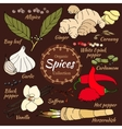collection of spice for food and cosmetic vector image vector image