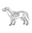 Dog skeleton outline vector image vector image