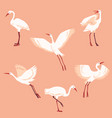 hand drawn white crane birds set vector image