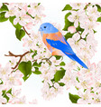 seamless texture small bird thrush bluebird vector image vector image