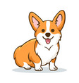 funny orange welsh corgi vector image