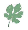 green leaf of fig tree vector image