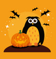 halloween card with pumpkin and owl vector image vector image