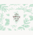 hand drawn mint and vanilla background vector image vector image